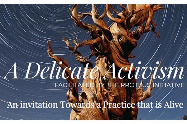 delicate activism course